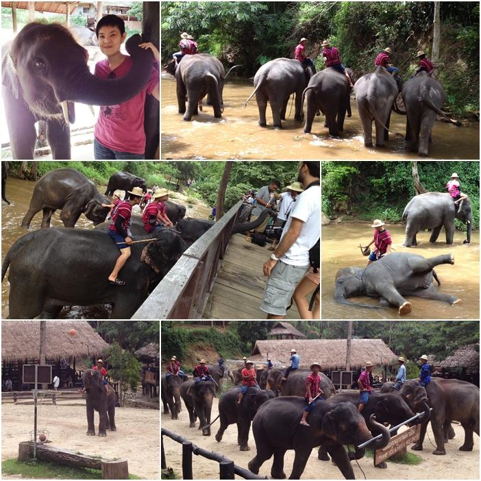 ปางช้างแม่สา2